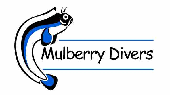 Mulberry Divers Logo